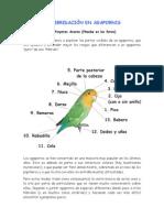 La Hibridacion en Agapornis - Pinyeres Assens 20090117130225
