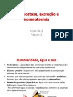 Aula VI -Homeostase, excreção e homeotermia.pptx