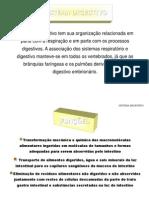 S.digestivo