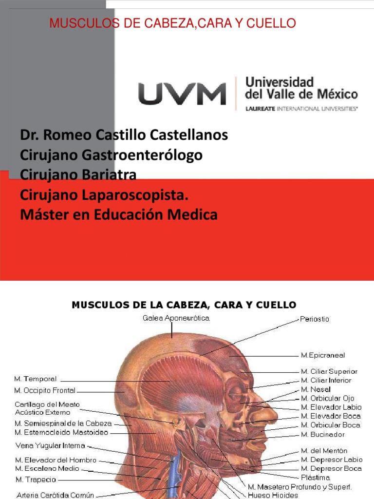 Musculos de La Cabeza,Cara y Cuellos