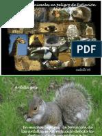 441 Animales en Peligro (Menudospeques.net)