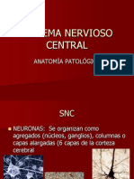 Anatomía-SNC