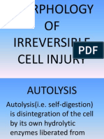 Morphology of Irreversible Cell Injury