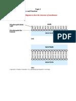 Topic 2.4 Membranes