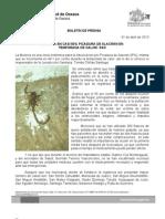 01/04/13 Germán Tenorio Vasconcelos PICADURA DE ALACRÁN, MÁS FRECUENTE EN TEMPORADA DE CALOR