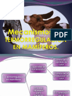 La Termorregulacion en Mamiferos Presentacion