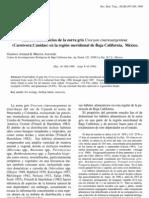 Arnaud, G., & Acevedo, M. (1990). Hábitos alimenticios de la zorra gris, Urocyon cinereoargenteus (Carnívora Canidae) en la región meridional de Baja California, México. Revista de Biología Tropical, 32, 499-502.
