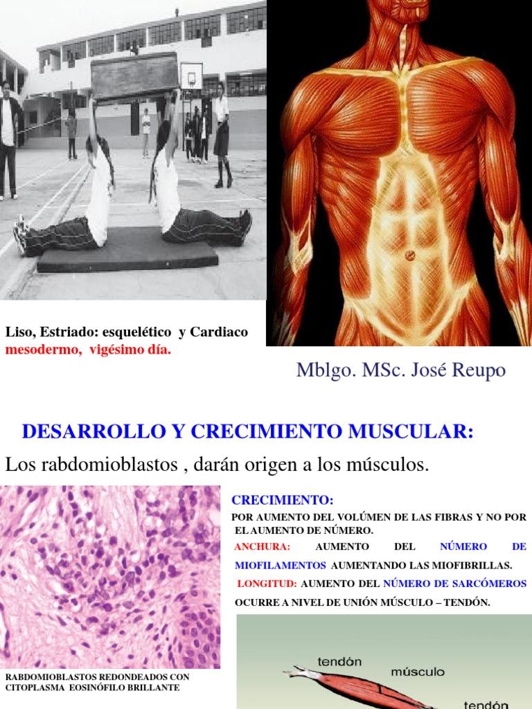 Sist. Muscular II Ok e.