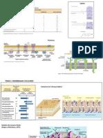 histología presentación 1