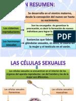 2da Exp El Embarazo