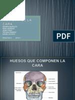 ANATOMIA DE LA CARA.pptx