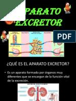 Aparato Excretor Final