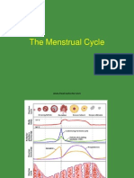 menstrualcycle-100515015456-phpapp02