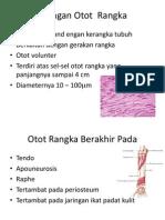 Otot  Rangka