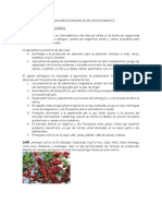 Actividades Economicas de Centro America
