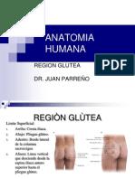 Clase 6 - Anatomia Humana