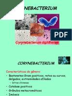 Cory Ne Bacterium