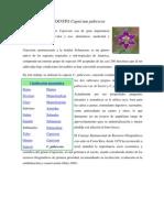 Cultivo Del Rocoto Capsicum Pubescen