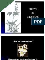 38928667-orquideas