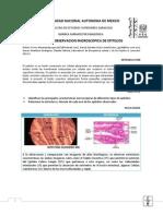 Histologia (1).pdf