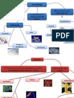 microbiologia portafolio