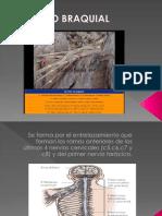 nerviosdelaextremidadsuperior-091105010431-phpapp01