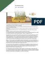 El Empleo de Plantas como Filtros Biológicos en