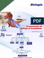 Clase 30 Fotosíntesis  Incorporación de energía al ecosistema