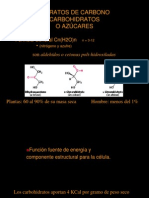 4. Hidratos de Carbono
