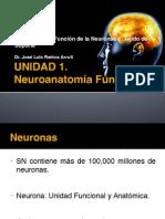 1.2 Estructura y Funcion de La Neuronas
