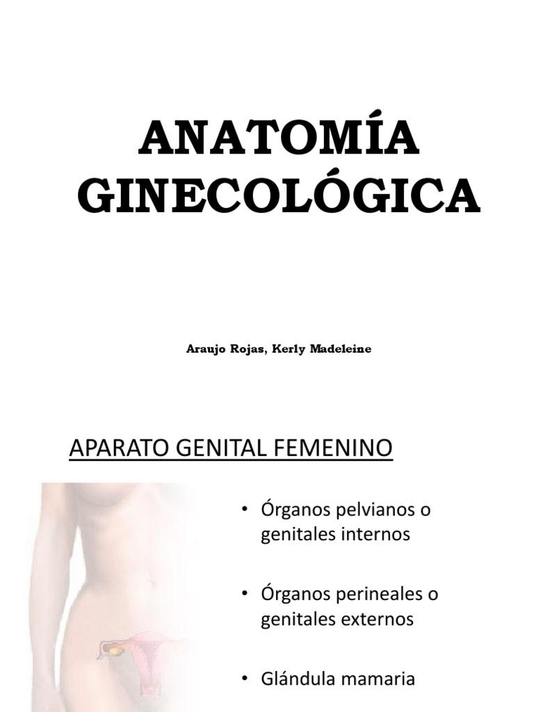 ANATOMÍA GINECOLÓGICA
