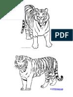Gambar Tiger