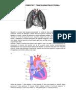 Anatomia de Superficie Corregido