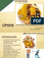 lipidos2