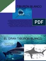 EL GRAN TIBURÓN BLANCO.ppt
