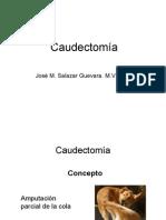Caudectomía [Sólo lectura] [Modo de compatibilidad] (1)