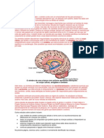 O cérebro do autista