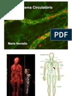sistema circulatorio TURMA PO2.pdf