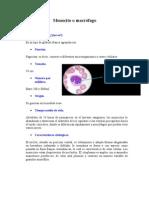 Monocito o macrófago saray