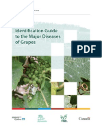 ODLICAN Id Guide Major Diseases Grapes e