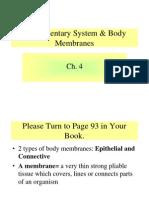 Anatomy  Integumentary System Darlene