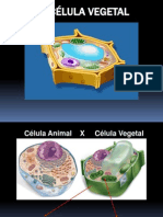 Aula 4 Celula Vegetal Parte 1