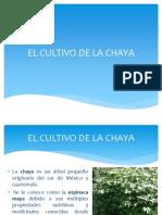 Cultivo y Uso de La Chaya
