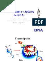 splicing of rnas