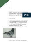 columbofilia-Pombas