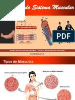 Fisiologia Sistema Muscular