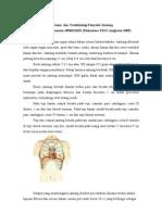 Anatomi-dan-Patofisiologi-Jantung.pdf