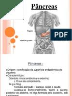 Histo - pâncreas