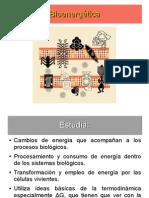 Bioenergtica II
