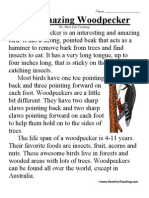 Amazing Woodpecker